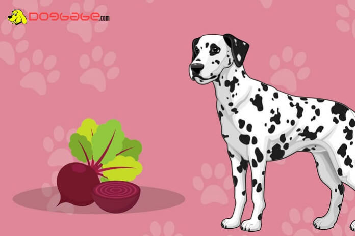dogs eat beets