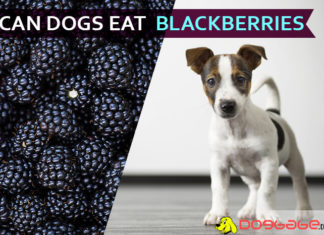 dogs eat blackberries