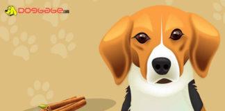 dogs eat cinnamon