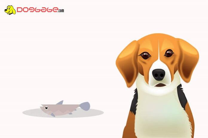 dogs eat fish