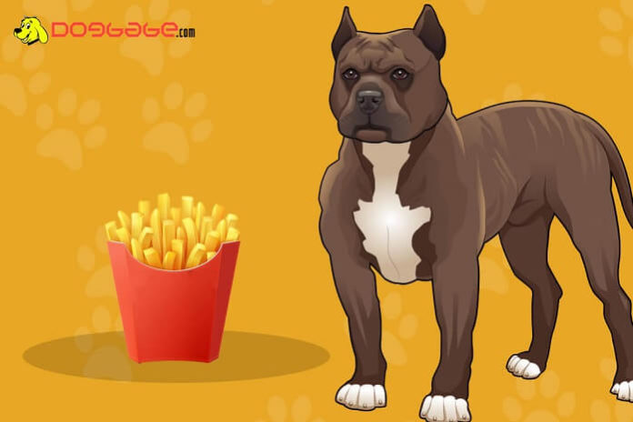 dogs eat french fries
