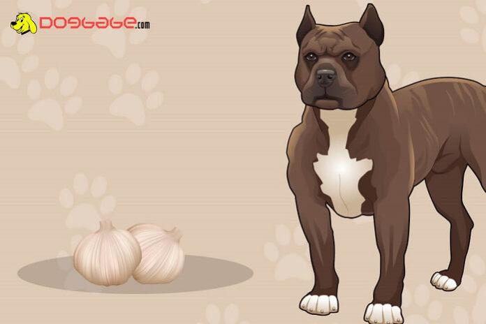 dogs eat garlic