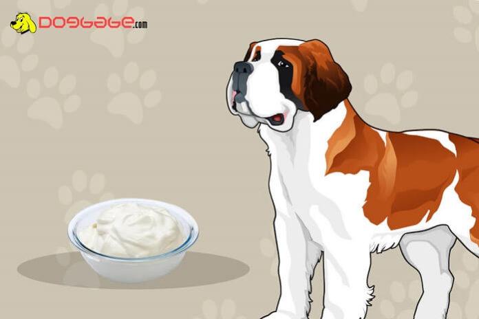 dogs eat greek yogurt
