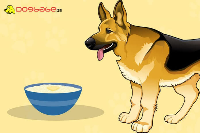 dogs eat grits