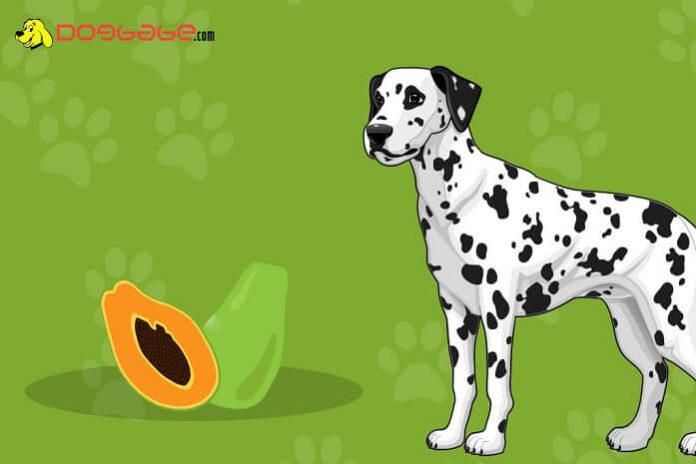 dogs eat papaya