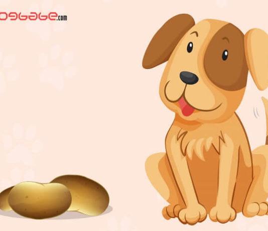 dogs eat potatoes