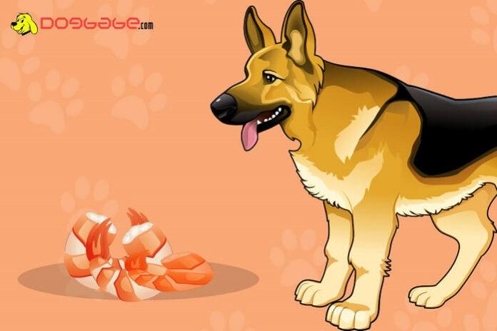 dogs eat shrimp