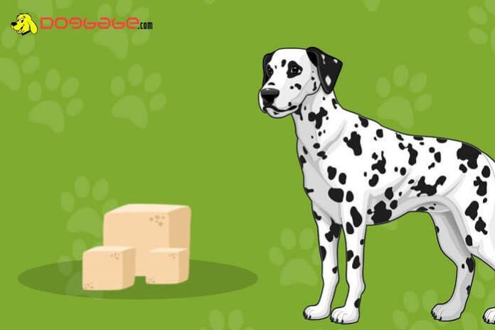 dogs eat tofu