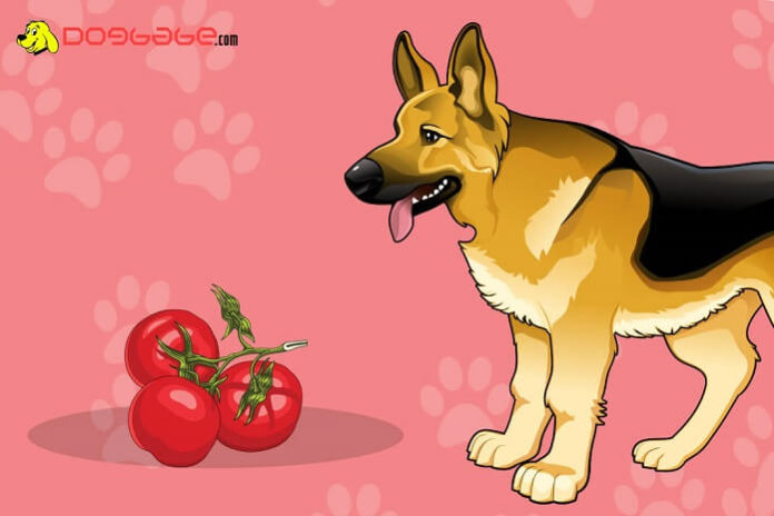 dogs eat tomatoes